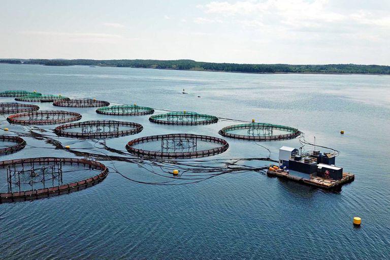 Jaulas flotantes de salmonicultura que afectan el ecosistema marino