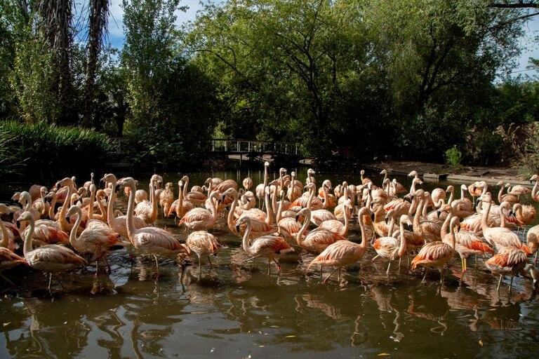 Detrás del parador hay una reserva donde conviven toda clase de aves, alrededor de una arbolada y una aguada.
