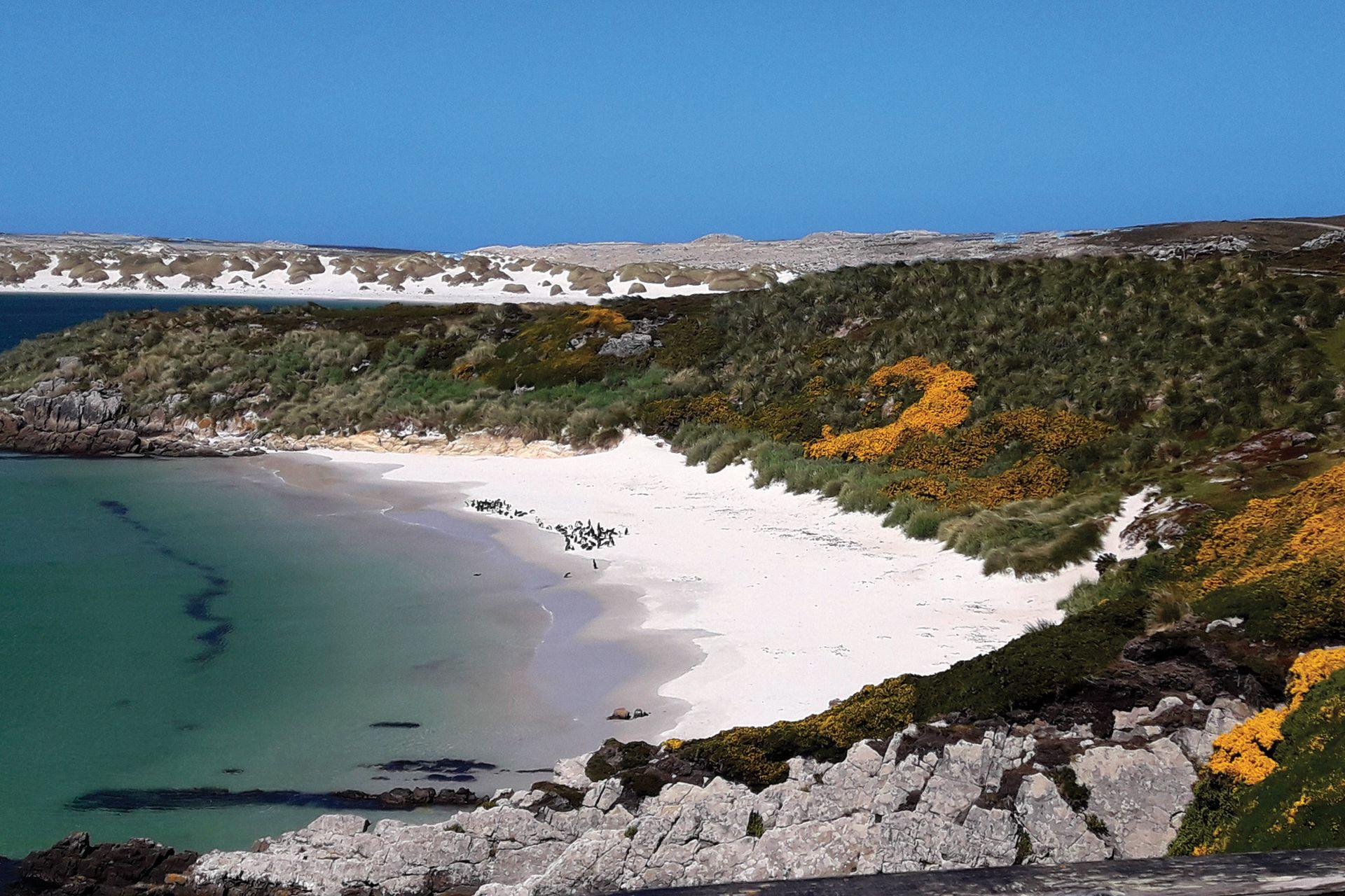 El paisaje de las islas es muy parecido al patagónico.