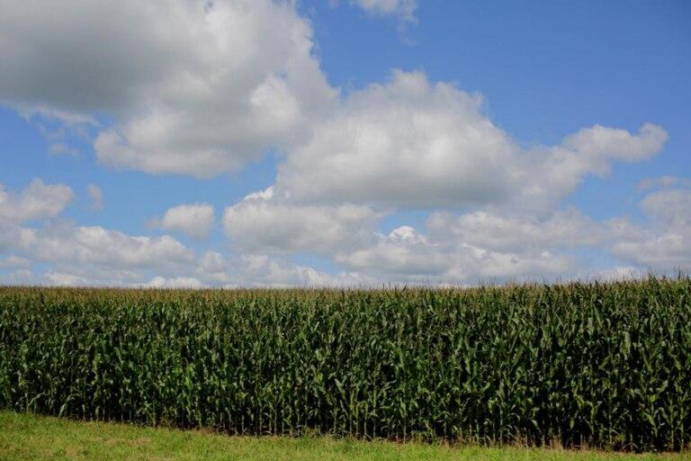 Mercado de granos: delicado equilibrio entre oferta y demanda