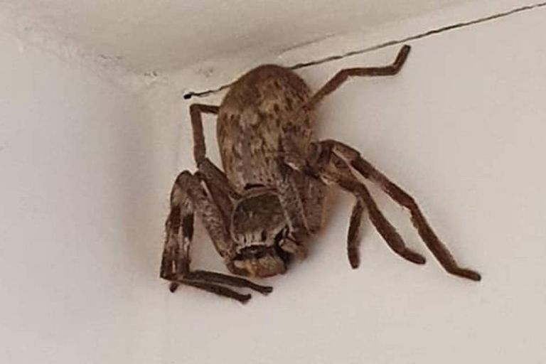 Susto: encontró una enorme araña en la ducha y le aconsejaron que deje su casa