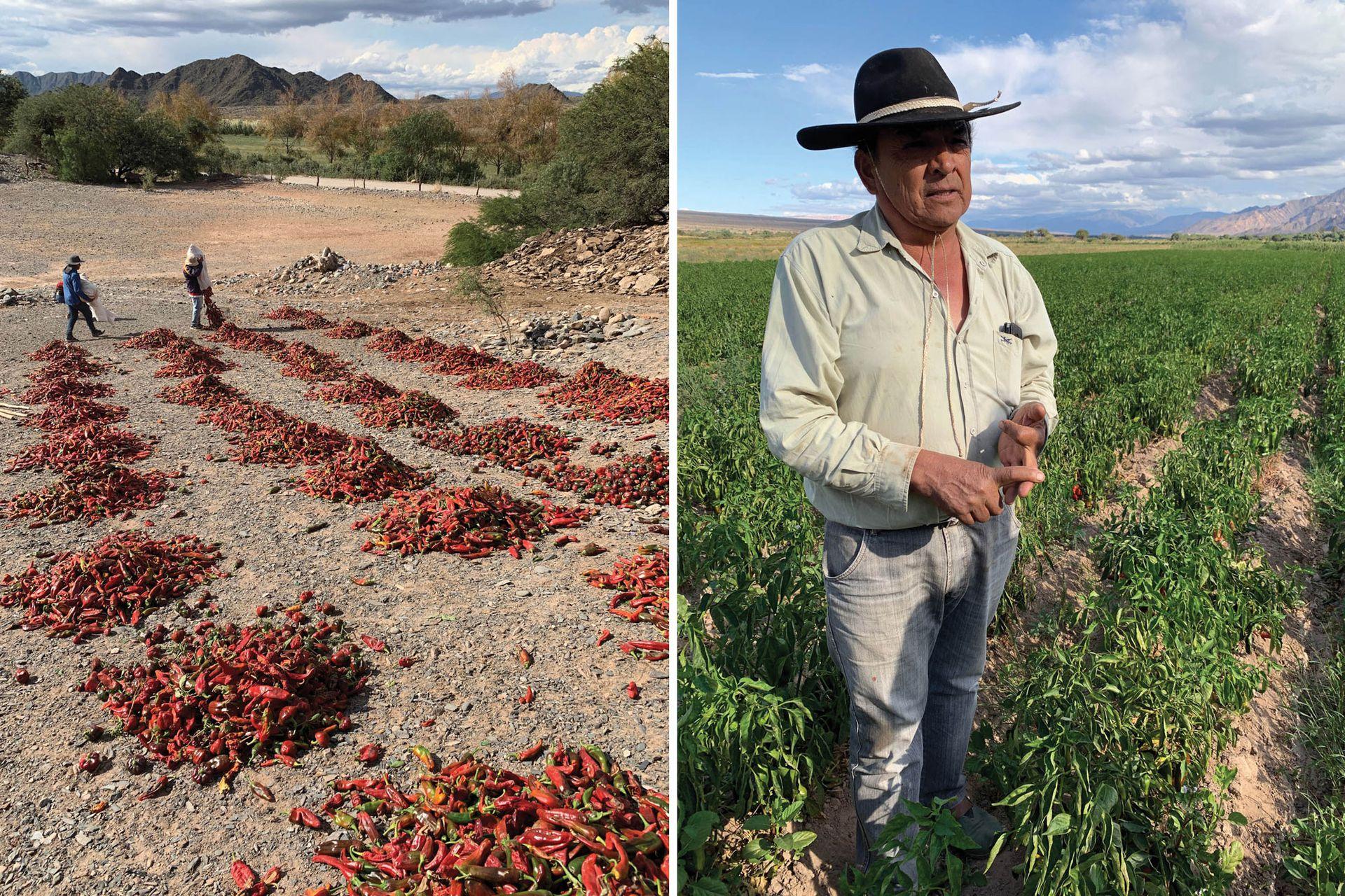 Izquierda: Luego de cosechados, los pimientos se disponen en pilas por 4 o 5 días, hasta que estén todos bien rojos. Derecha: Rubén Gutiérrez en los campos de cultivo cercanos a Molinos, provincia de Salta.
