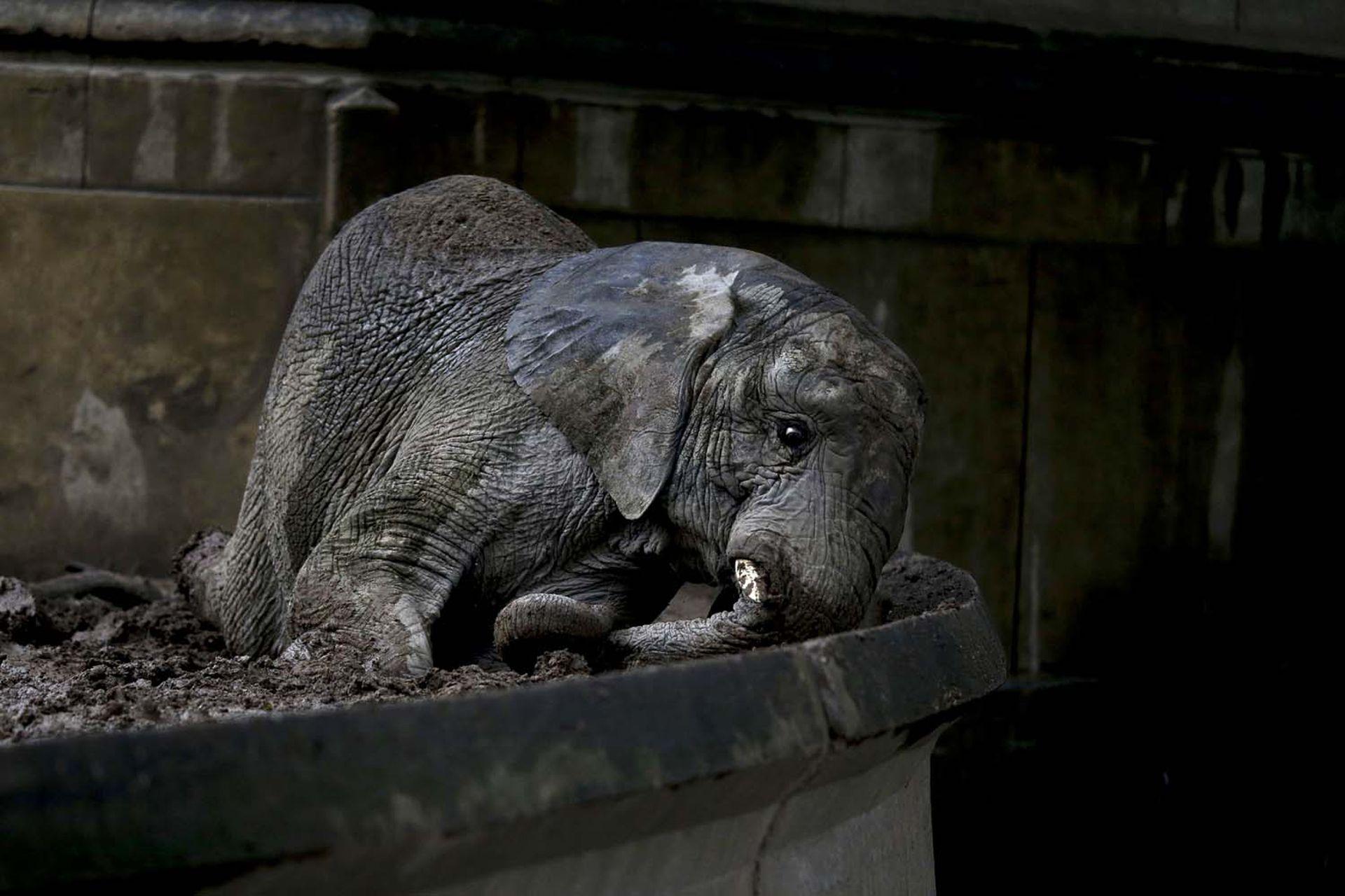 En 2017, la fotógrafa Natacha Pisarenko registró a los animales que aún estaban en el zoo de Buenos Aires.