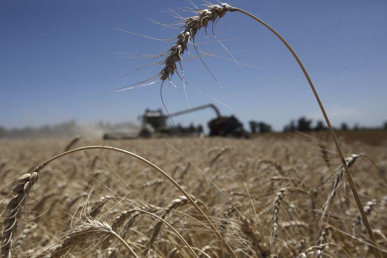 Crecieron 7,2% en valor las exportaciones de productos del agro a Brasil: qué rol jugó el trigo
