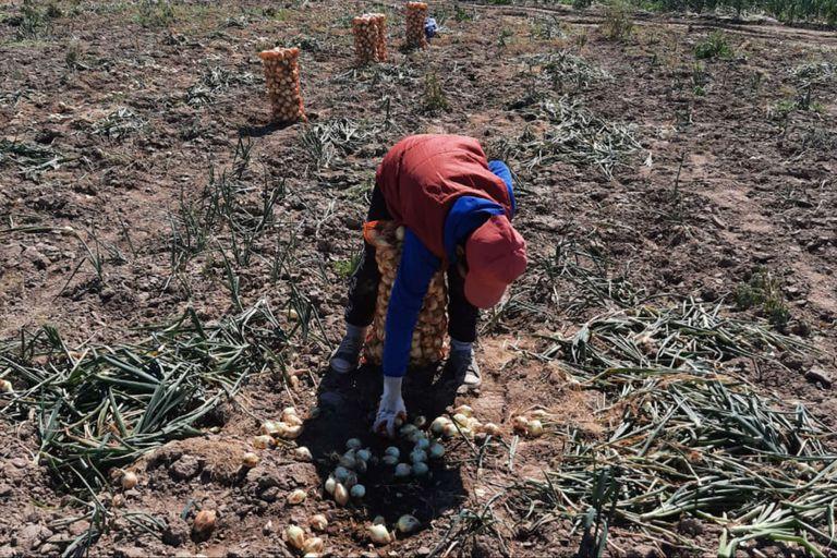 Día Mundial contra el Trabajo Infantil: cuál es el desafío principal para 2025