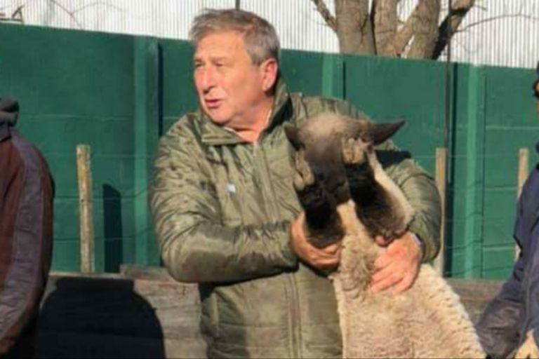 Hace 15 años que Ariel Manfroi tiene una cabaña ovina de la raza Hampshire Down