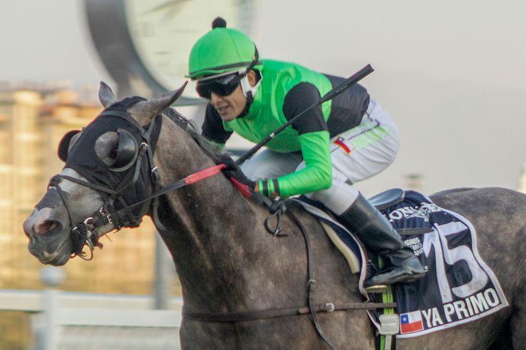 La victoria de Yo Primo fue la cuarta en el Club Hípico de Santiago, donde los caballos chilenos están invictos