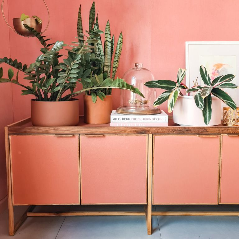 Deco con plantas: descubrí cuáles son las especies más elegidas para interiores