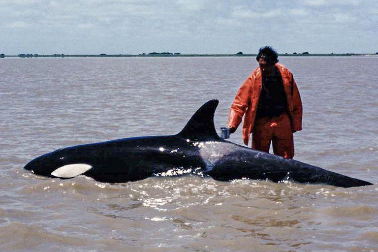 Imagen de Kshamenk durante su varamiento en la Bahía de Samborombón, en 1992