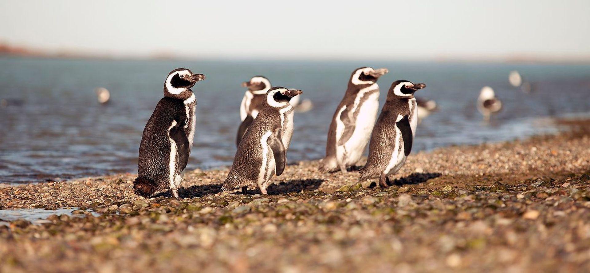 A Puerto Deseado se la conoce como la Galápagos Patagónica, por la diversidad de fauna