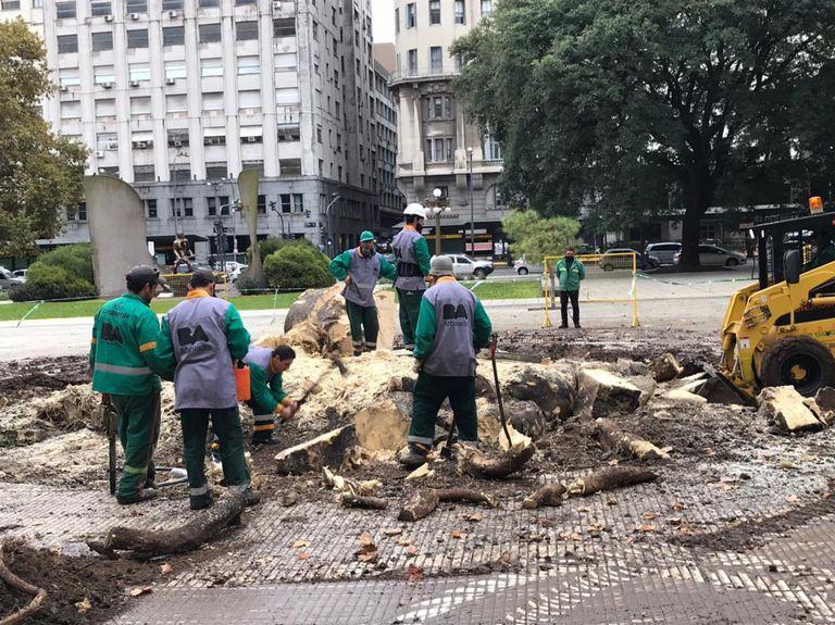 Operarios terminan de quitar el ombú de la Plaza de las Armas frente al Ministerio de Defensa de la Nación que tenía la estructura internada dañada por la presencia de un hongo
