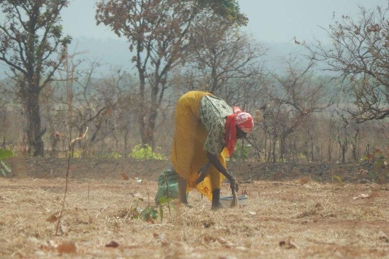 Los pobladores barren el terreno cosechado en busca de granos de soja, su fuente de proteína;  apenas logran llenar una taza de té después de un día de trabajo