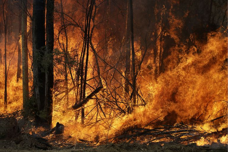 Los incendios devoraron más de ocho millones de hectáreas en Australia