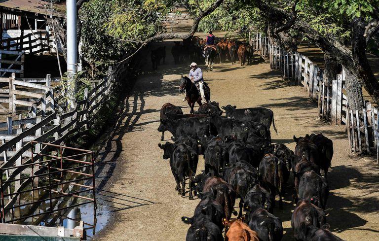 El valor de la hacienda se negoció en alza en el Mercado de Liniers