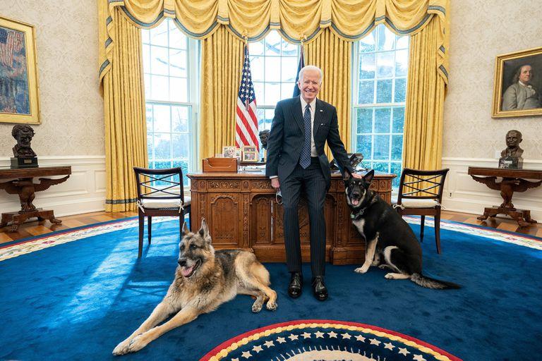 En la Casa Blanca: uno de los perros de Biden volvió a morder a un empleado