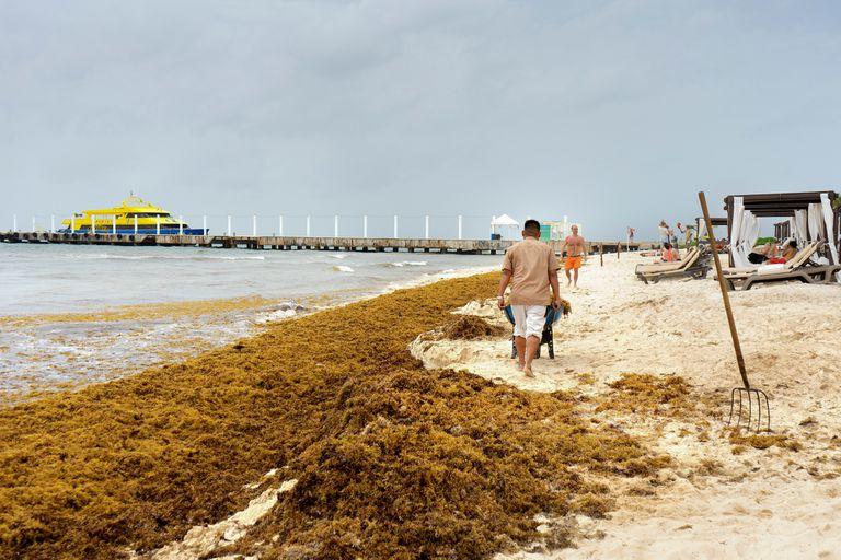 Según prevén es inminente una nueva oleada de algas; ante la noticia, la industria hotelera está en alerta y los viajeros, organizados