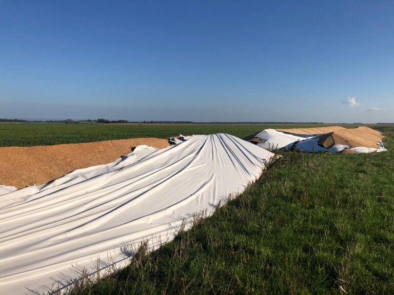 En un campo en Mar del Plata destruyeron tres silobolsas con 200 toneladas de trigo cada uno