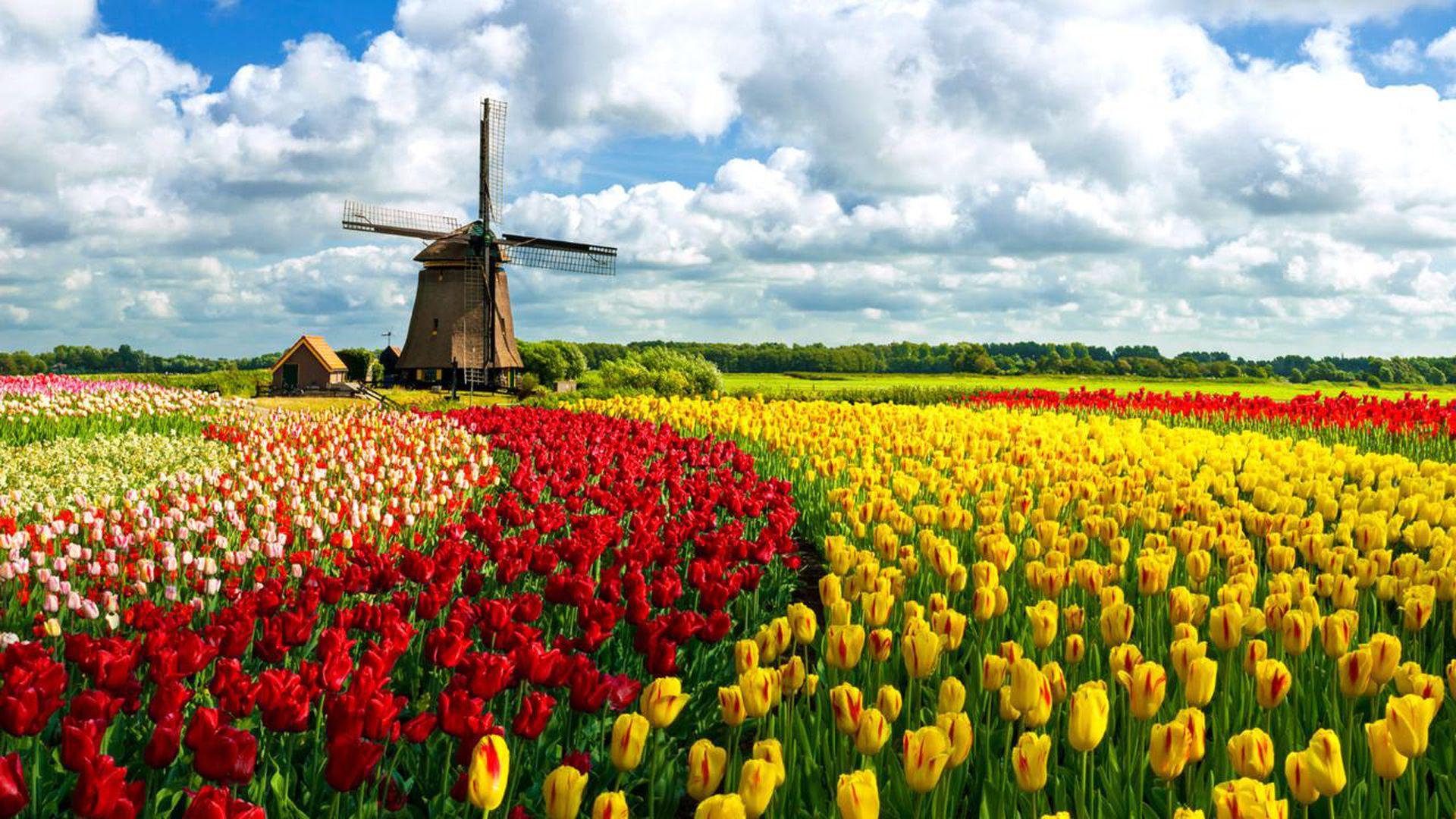 Holanda adoptó el nombre de Países Bajos para representar a todas las zonas del país