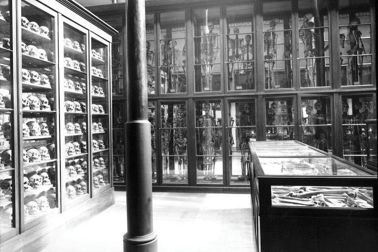 El Museo de La Plata, creado por decreto provincial el 19 de septiembre de 1884. Desde 2006, los esqueletos dejaron de exhibirse en las vitrinas.