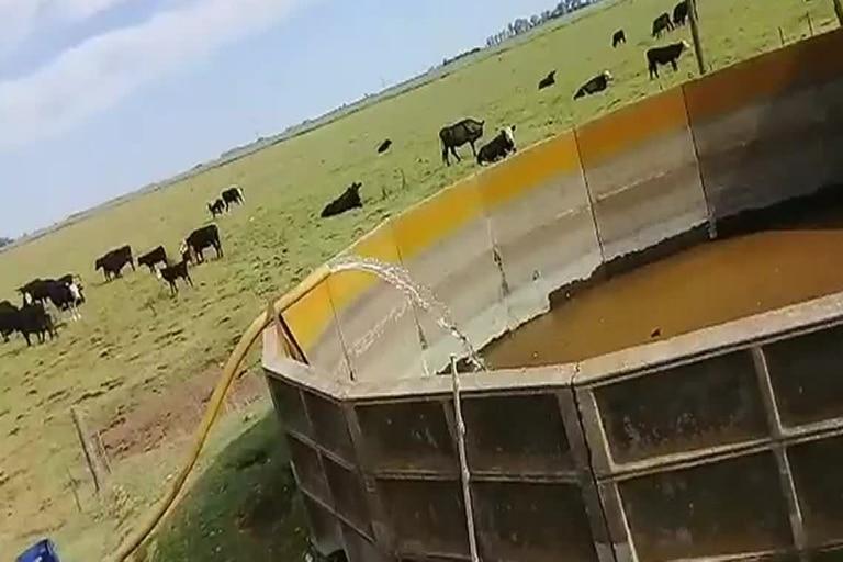En Carlos Tejedor hay productores que buscan comprar agua porque ya no tienen en su campo o la disponible no es de calidad  para la hacienda