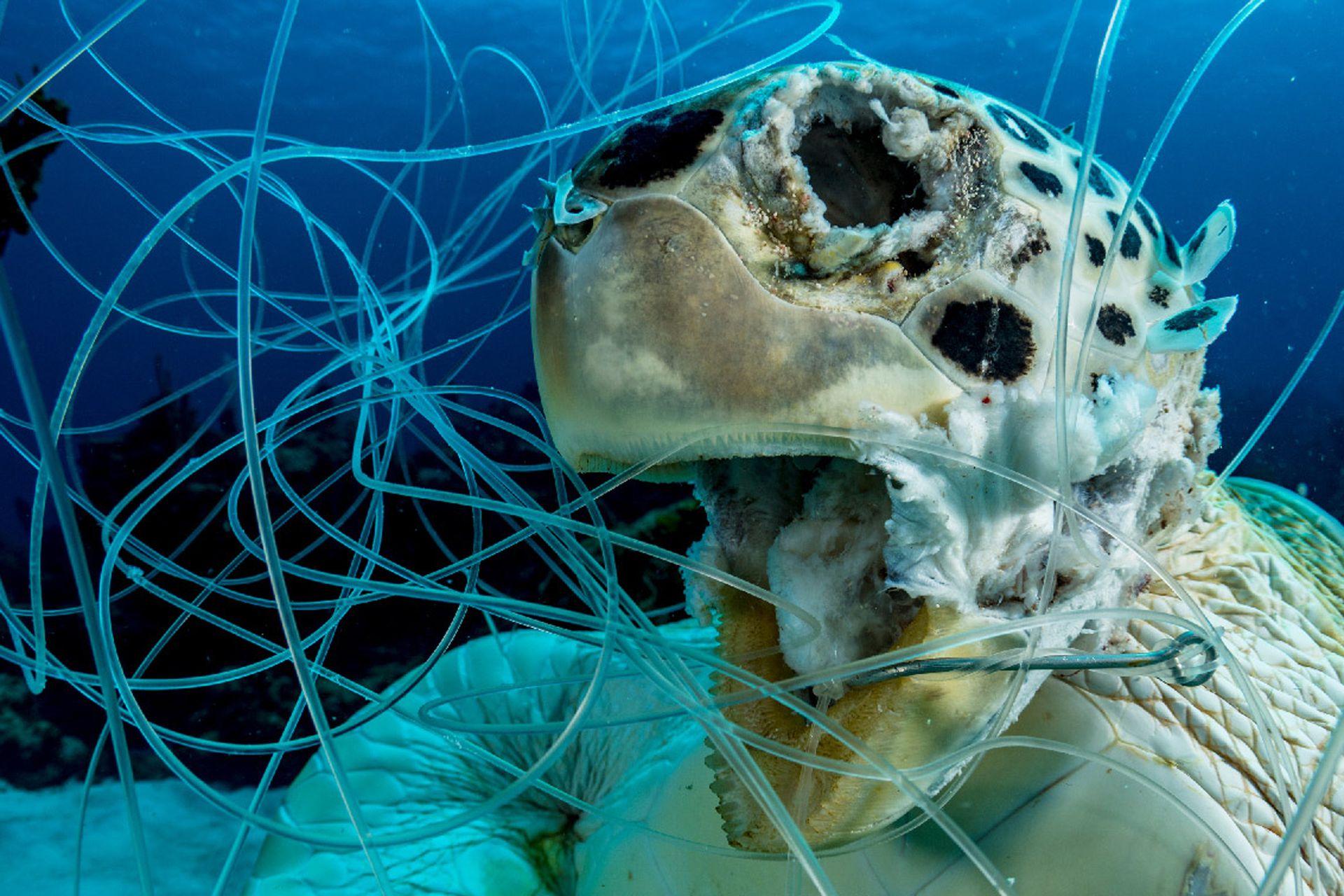 """Primer puesto: """"Víctima"""" tomada en Eleuthera, Bahamas por Shane Gross"""