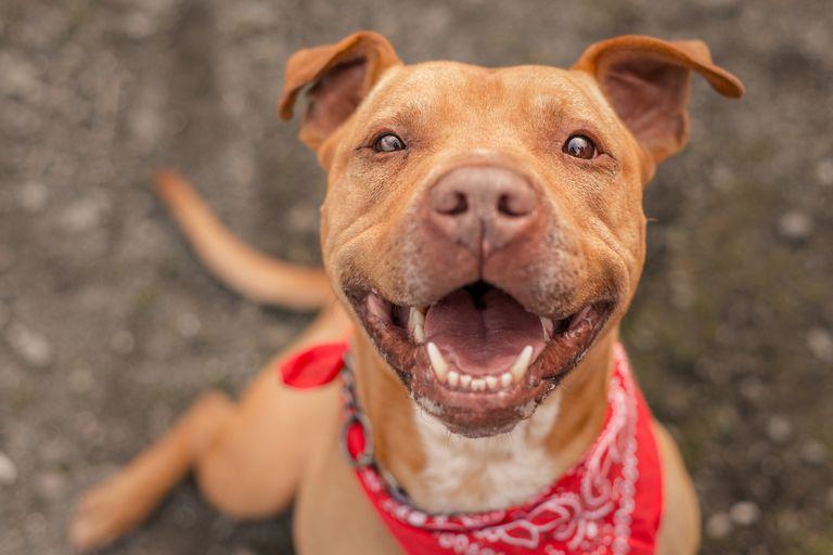 La persona dispuesta a adoptar a este tipo de perros -como a cualquier animal- tienen que informarse antes sobre lo que ello implica y saber si está en condiciones de cuidarlo adecuadamente