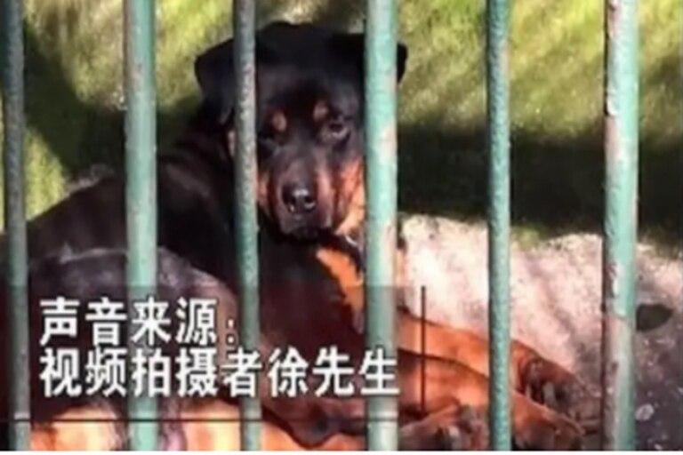 """Las autoridades afirmaron que era """"un perro guardián""""."""