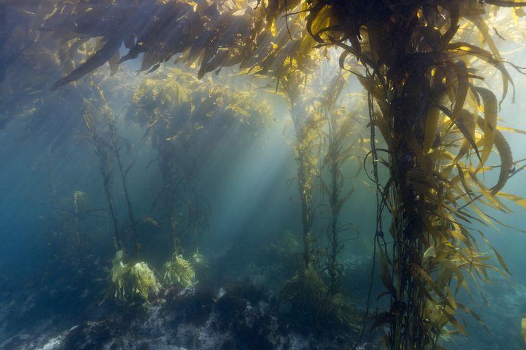 Cada 8 de junio se celebra el Día Mundial del Océano.
