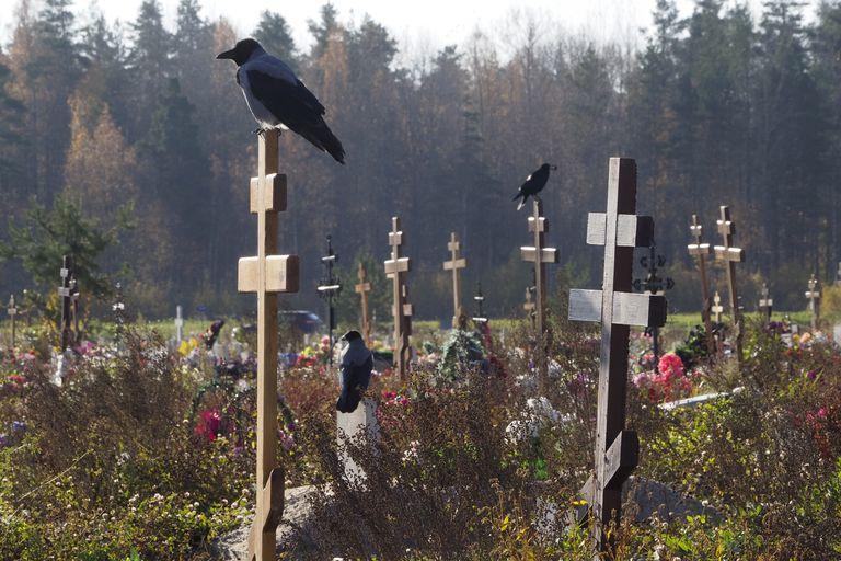 Cuervos posados en las cruces de una sección de cementerio reservada a víctimas del coronavirus en Kolpino, a las afueras de San Petersburgo, Rusia, el martes 12 de octubre de 2021. Rusia batió otro récord de muertos por coronavirus en Rusia, mientras su campaña de vacunación avanzaba con lentitud. (AP Foto/Dmitri Lovetsky)