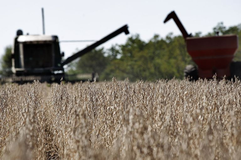 Los buenos precios de la soja disparan las consultas para invertir en el agro