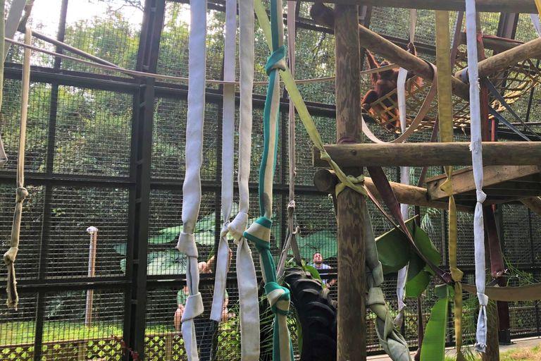 La orangutana Sandra ya se encuentra en el refugio Centro para Grandes Simios de Florida, en Estados Unidos