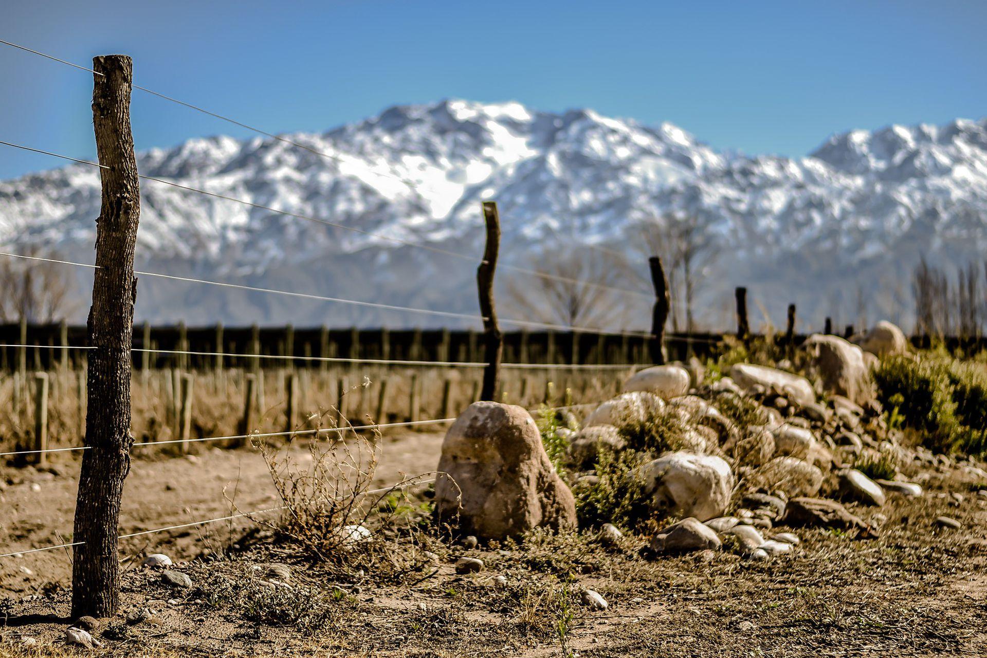 ¿El terroir importa? Paraje Altamira también tiene sus viñedos