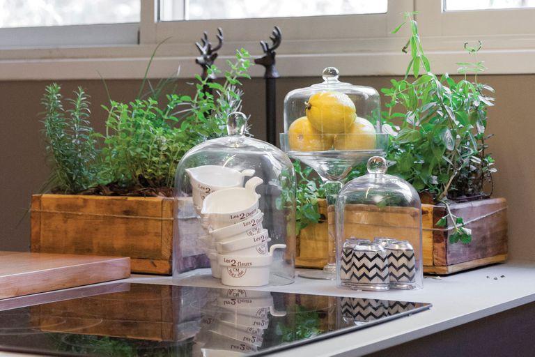 3 especies de aromáticas que se pueden cultivar en la cocina