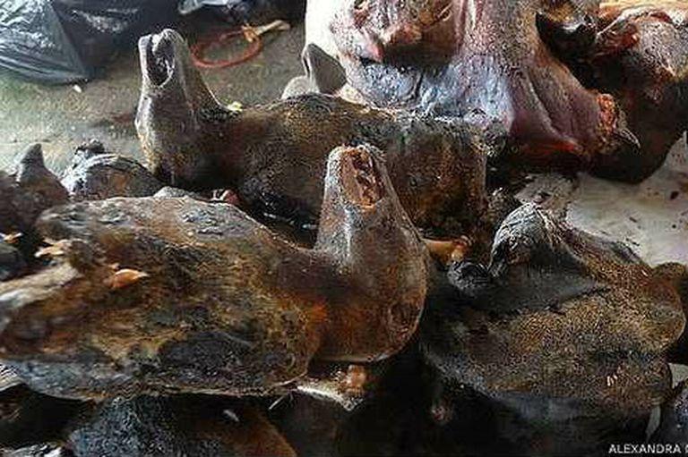 Se cree que más de 100.000 murciélagos son consumidos cada año en Ghana