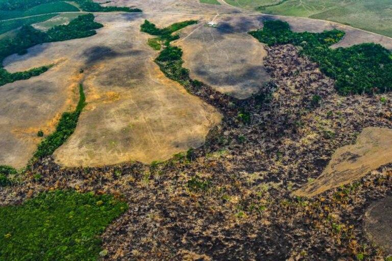 Sobrevuelo realizado por la Fundación para la Conservación y Desarrollo Sostenible en marzo del 2020 en bosque ya tumbado en la Amazonia