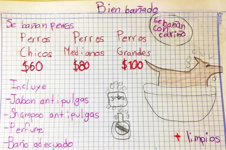 """Un chico mexicano empezó su propio emprendimiento y lo viralizó a través de las redes sociales; promete que las mascotas terminan """"más limpios y más felices"""""""