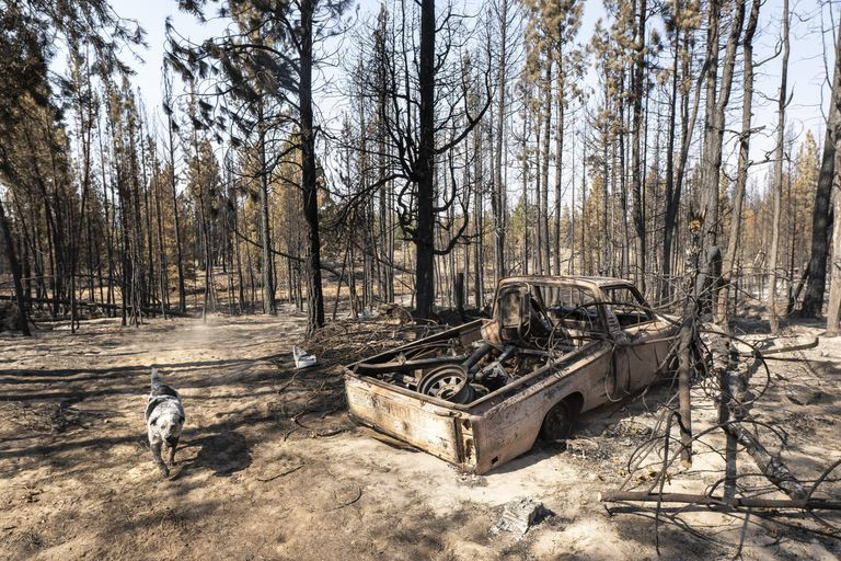 Un perro llamado Zippy camina junto a una camioneta calcinada perteneciente a su dueña Gauge Clark, cuya casa quedó destruida en el incendio cerca de Bly, Oregon, el jueves 22 de julio de 2021. (AP Foto/Nathan Howard)