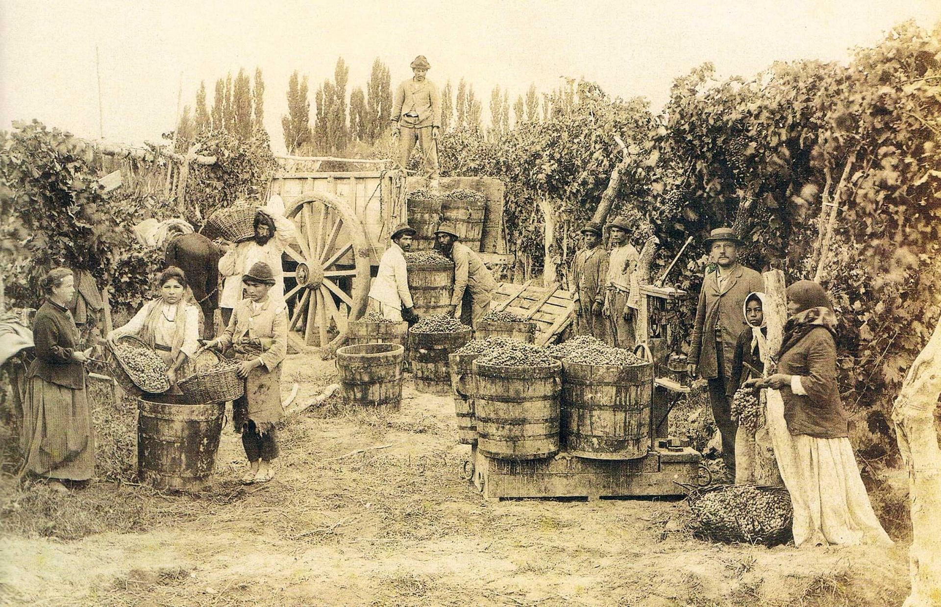 Pioneros de la vitivinicultura.