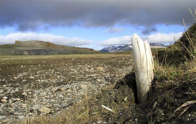 Un colmillo de mamut lanudo hallado en permafrost siberiano. Fuente: Love Dalén