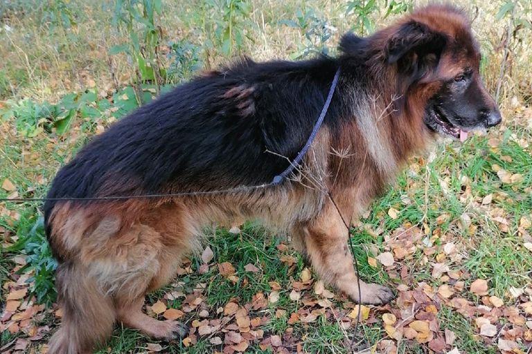 El perro fue sacrificado por una enfermedad grave que finalmente no tenía