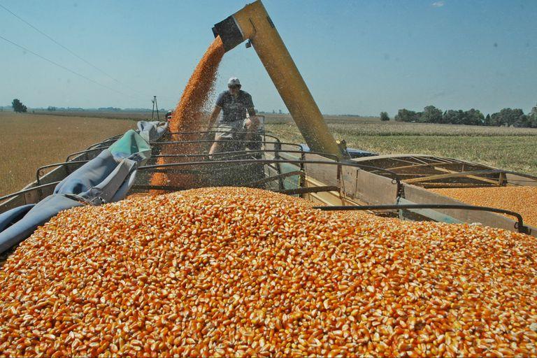 El país podría totalizar exportaciones por 32 millones de toneladas, según la BCR