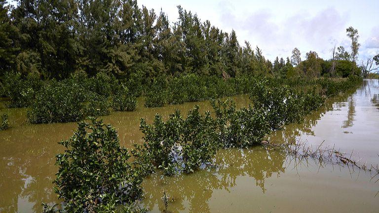 En Concordia, los árboles citrícolas quedaron anegados