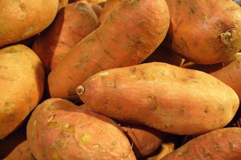 Tubérculos de batata