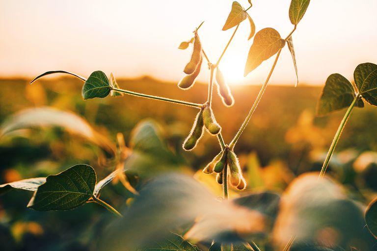 Molienda de soja: fuerte recuperación de la capacidad de la industria