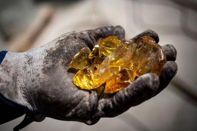 """Qué es el """"oro líquido"""" que se esconde en los bosques de España"""