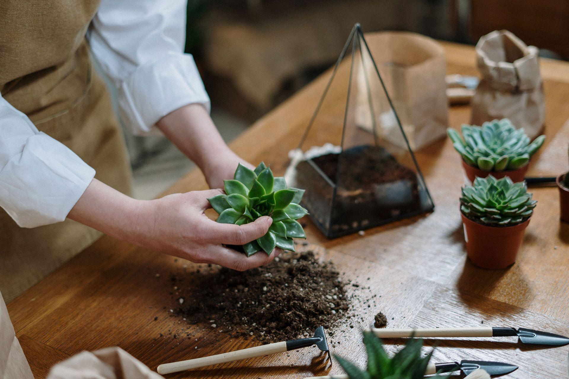 Terrarios: son tendencia en la decoración de interiores y entre los amantes de las plantas.