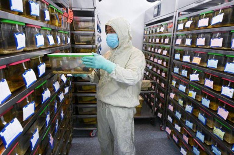 China: en plena lucha contra el coronavirus, reportan una muerte por hantavirus