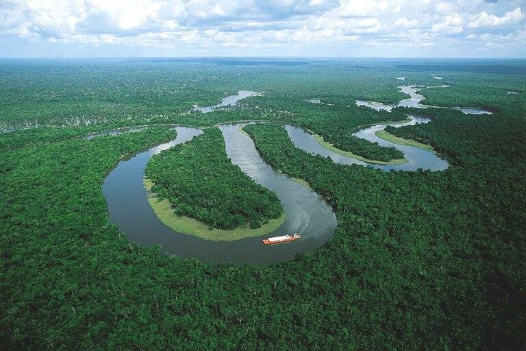 Los bosques cubren más del 30% de la superficie terrestre de la Tierra y los tropicales albergan entre 50% y 90% de las especies terrestres