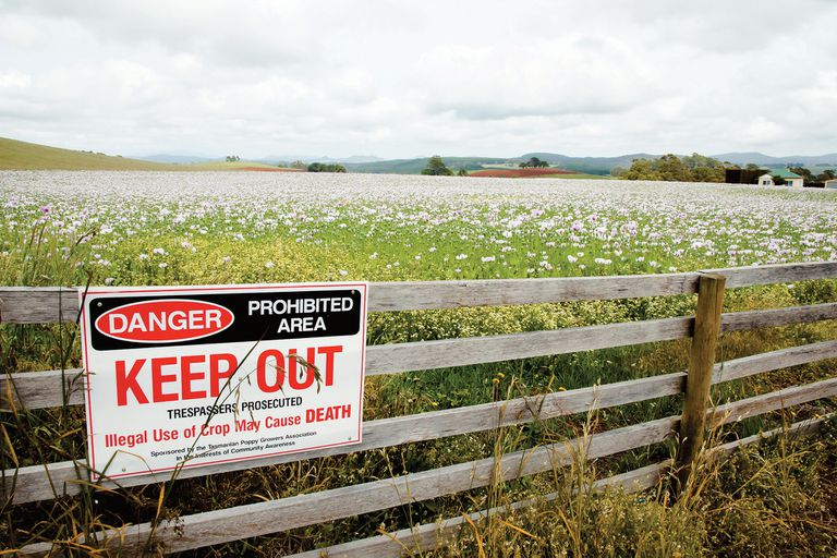 En un campo al norte de Tasmania, un cartel prohíbe el ingreso y advierte sobre la letalidad del consumo del cultivo