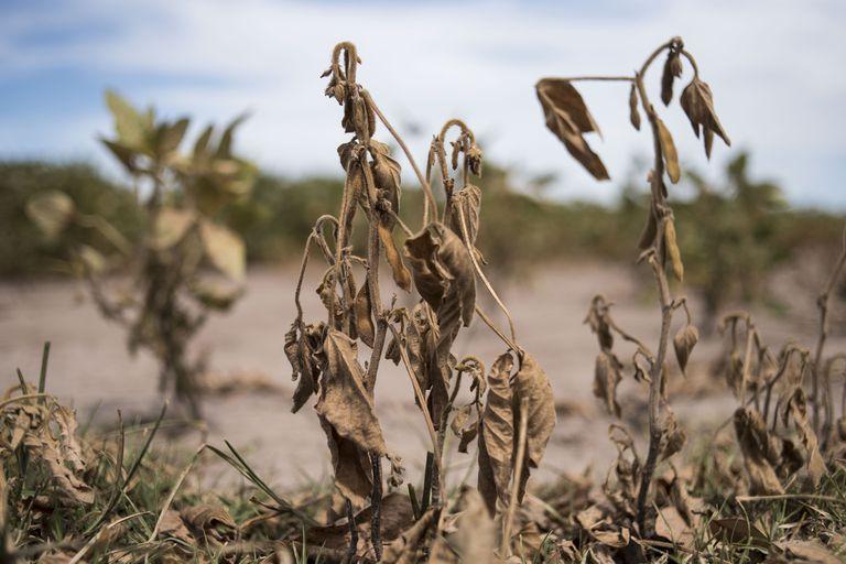 Mercado de granos: el riesgo de la incertidumbre